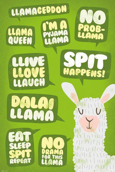 Llama Poster Pack Quotes 61 x 91 cm (5)